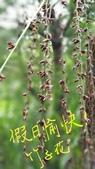 2018.04.15 日記:2018.04.15 大溪松園 (21).jpg
