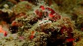 2017+2018年的東北角潛水記錄:P9090032(001).jpg
