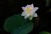 2014年07月的華山荷塘:IMG_7787.jpg