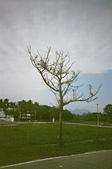 [Film 1]  綠島【Pentax Espio Mini + XTRA400】:〔2014-10-08〕 這個....就只是一棵樹而已:P