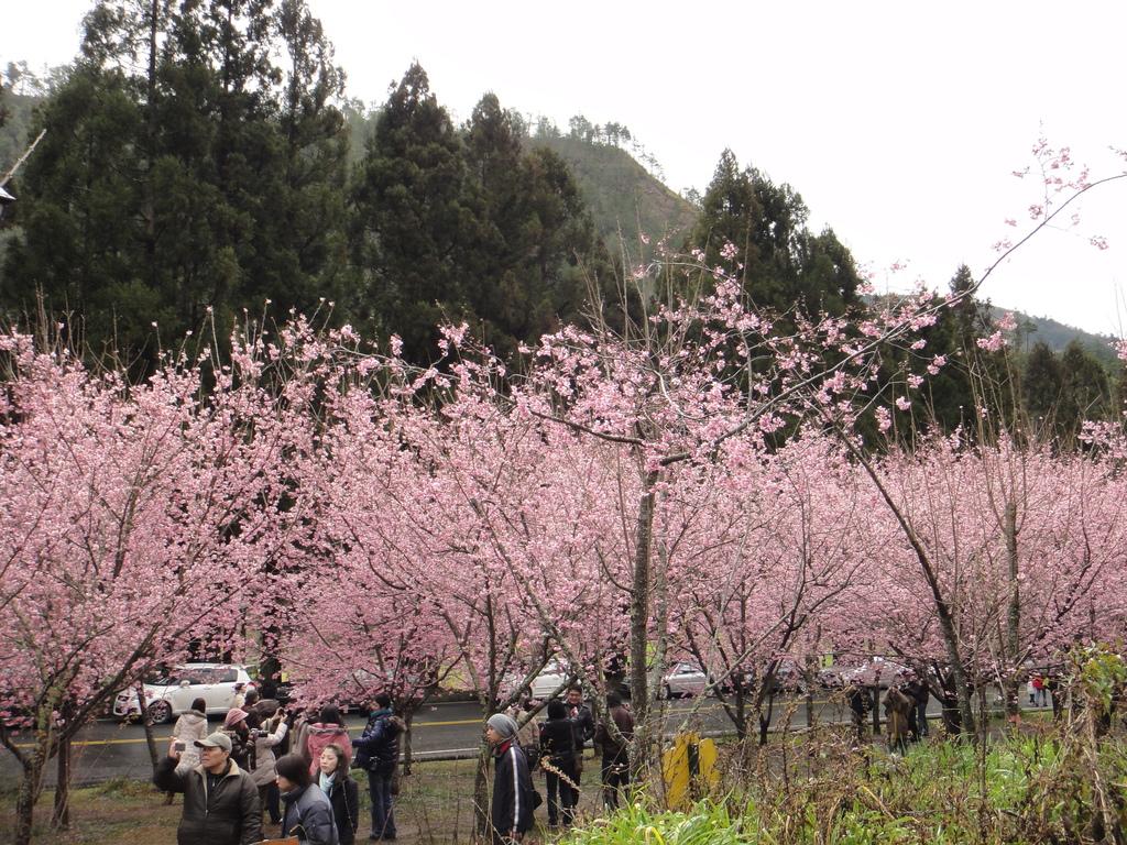 2011-02-20_武陵農場賞櫻行:0220_剛上山時還沒放晴的天空