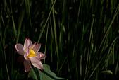 2014-07-06_台大安康農場:這是另外一朵!園主藏好一朵,又放了另外一朵出來現寶 ^^