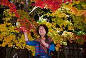 2014-11-25_福壽山賞楓:五顏六色的背景,好適合拍人