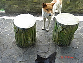 2006.08.17.司馬庫斯歷險記:第四站:想吃東西的狗狗