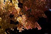 2014-11-25_福壽山賞楓:雖然比不上正片的色調,但600D拍出這個畫面我很感動了~