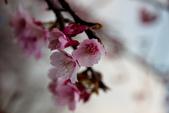 2014-01-18_清大梅園 & 平菁街42巷:糊過頭範而像油畫的感覺....