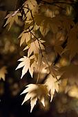 2014-11-25_福壽山賞楓:IMG_0409.jpg