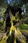 2013-03-22_阿里山森林遊樂區:陽光與老樹