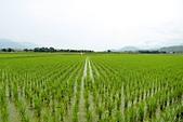 2012-08-09_鹿野、池上大坡池、伯朗大道、稻米原鄉館、羅山、六十石山:IMG_2451(001).jpg
