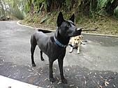 2010-09-30_瑞里印像區:Day2_綠色隧道的狗狗(來騙月餅吃的XD)