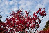 2014-03-10_阿里山拼命行:IMG_4339.jpg
