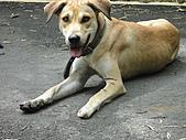 2010-09-30_瑞里印像區:可憐的狗狗,腳上被砍了五刀