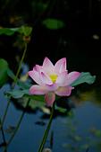2014年07月的華山荷塘:IMG_7296.jpg