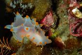 2015-05-16~17_小琉球之海龜看到膩:Nudi