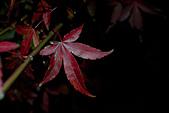 2014-11-24_福壽山農場 Day1:用手機的光線打光,可惜沒挑到漂亮的葉子