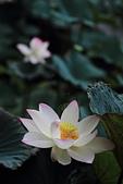2014-07/10 & 08/15_新竹靜心湖:〔07/10〕