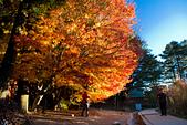 2014-11-25_福壽山賞楓:漂亮的光影,但有避不開的遊客~