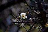 2014-01-12_清大梅園:IMG_2711.JPG