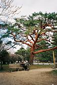 [Film 18] 金澤(2015/12) & 京都(2016/03):〔2016-03-11〕長者。(這棵樹的顏色很特別)