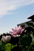 2014-07-19_觀音蓮花季:IMG_7684.jpg