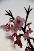2014-01-18_清大梅園 & 平菁街42巷:有型的樹枝(主角是樹枝!)