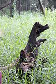 2012-08-11_伯朗大道、泰源幽谷、東河橋、都蘭(國小、糖廠)、杉原、伽路蘭、森林公園:手震了,不過很像狗狗呢!