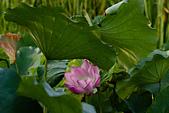 2014-07-06_台大安康農場:IMG_6851.jpg