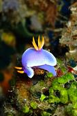 2015/04/3~4_TG3的第一次下水:我也有海蛞蝓了耶!(撒花)