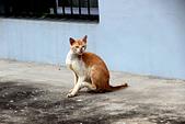 2014/06/28,29_小琉球&墾丁(陸地+海底):睡到一半被我嚇走的貓XD