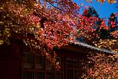 2014-11-25_福壽山賞楓:IMG_0525.jpg