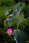 2014-07-06_台大安康農場:喜歡那幾根芒花:P