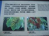 20090502 [台中]「大雪山森林遊樂區」之單人探險記:大雪山林道賞鳥平台的介紹