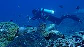 2017年11月,平常日的小琉球海底三日遊 (NO. 145~151):導潛祥庭