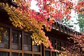 2014-11-24_福壽山農場 Day1:一閃而過的陽光