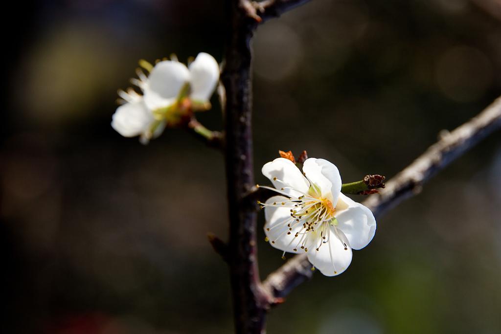 2014-01-12_清大梅園:IMG_2752.JPG