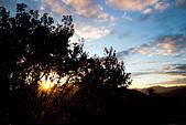 2014-11-24_福壽山農場 Day1:陽光穿過樹叢