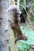2013年02月_蛇年新春到處行:不怕人的擺POSE松鼠