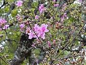 2010-05-09 母親節武陵農場行:萬綠叢中一點『粉』