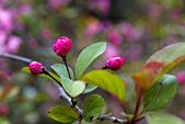 2013-03-22_阿里山森林遊樂區:我就是愛拍小花苞 :P