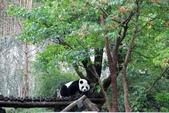 2013年02月_蛇年新春到處行:被遊客吵醒的熊貓