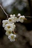 2013-12-31_信義鄉賞梅趣:IMG_2388.JPG