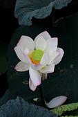2014-07/10 & 08/15_新竹靜心湖:〔07/10〕歪歪的....