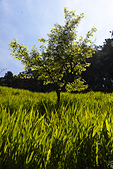 2013-03-22_阿里山森林遊樂區:「阿里山遊樂區」的小樹