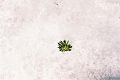[Film 40] 華嚴瀑布+中禪寺湖+戰場之原+東照宮_2017年03月:結冰雪地裡的一株綠意