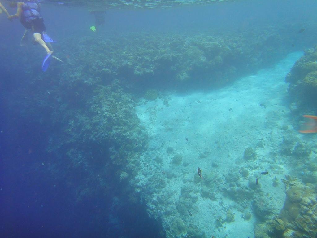 20110818_帛琉PaPaGo Day2 出海去:這裡就是開始要落差的大斷層!!