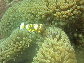 2013-06-15~17_OW潛水員訓練:這隻是透明的蝦子!