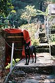[Film 7] 2015年02月生活(神山、霧台、阿禮、武界、曲冰):(2015/02/14) 可愛的小黑狗:P