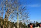 2013年02月_蛇年新春到處行:藍天與芽樹 @微熱山丘