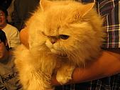 20061222 [新竹]冬至老闆家:老闆的愛貓(喜馬拉雅貓?)