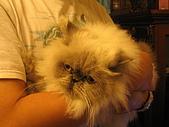 20061222 [新竹]冬至老闆家:很無奈心裡在哀嚎的貓...